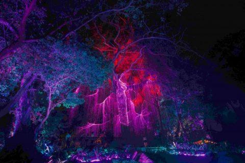 lights__10_of_1_-768x509