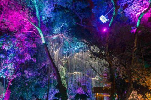 lights__2_of_1_-768x1160